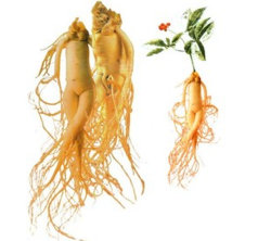 Estratti puri della radice del Ginseng del Panax per l'Immune-Amplificazione utilizzata nel supplemento dietetico