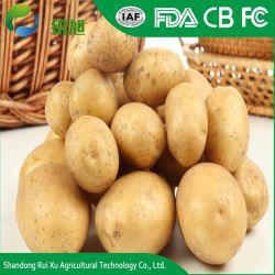 Frische Shandong-Kartoffel 80-150g