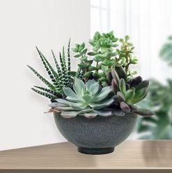 """제조업체 도매 중단 되지 않은 환경 친화적 홈 장식 다채로운 13"""" 용기 플라스틱 화분 식물 식물 식물 식물 정원 식물"""