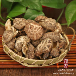 Getrockneter Shiitake-Pilz ohne Stamm (weiße Blume)