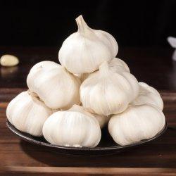 Aglio bianco fresco, migliore aglio dell'Egitto dell'aglio viola per il commercio all'ingrosso