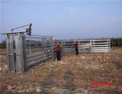2019 Banheira de venda de gado galvanizado Yard China
