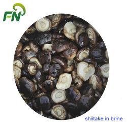 소금물 전체적인 버섯에 있는 Shiitake
