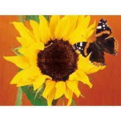 Butterfly diamond diamant Peinture Peinture d'huile d'art Dlh1012
