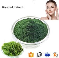 El mejor precio pura cosmética Extracto de Algas Marinas en polvo para blanquear la piel