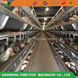 Cage de la couche d'oeufs de batterie automatique de poulet Poulet de la Chambre de la cage de l'équipement de la volaille