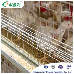 H형 자동 배터리 일 구층 닭 케이지 가금류 번식 장비