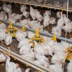 Plastic Poultry Feeder Pan Backet water drinker Farm Equipment Auto Kippenvoer