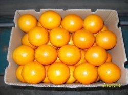 おいしいフルーツの最高品質のオレンジ