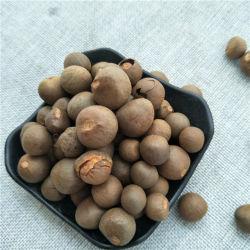 O melhor preço elevado a taxa de germina o de sementes de árvore de chá de camellia à plantação