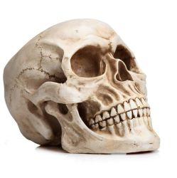 Het medische Anatomische Plastic Menselijke Model van het Been van de Schedel Hoofd