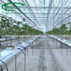 Венло Multi-Span Hydroponical NFT салат стекла выбросов парниковых газов для продажи