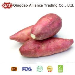 Süsse Kartoffel des neuen Getreide-2017 mit Qualität
