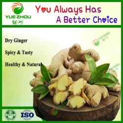 Commerce de gros de l'air avec le gingembre à sec de qualité supérieure