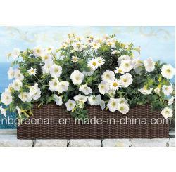 De openlucht Pot van de Bloem van de Rotan van het Terras Rieten/Planter/de Rieten Potten van de Installatie van het Meubilair/van de poly-Rotan
