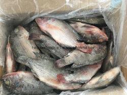 온라운드냉동 틸라피아 어류 공급사