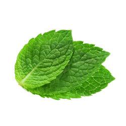 Foglie di menta essiccate di alta qualità per tè alla menta piperita