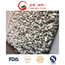 La nouvelle récolte fraîche dans d'arachide Shell Kernles d'arachide