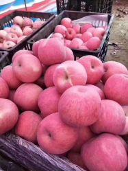 De zoete Verse Appel FUJI van het Fruit van het Verse Fruit van China