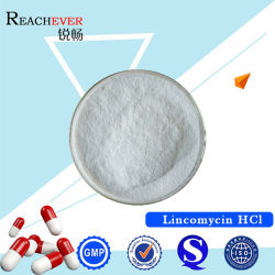 Le chlorhydrate de la lincomycine avec certificat GMP