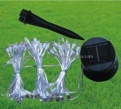 태양 끈 빛 - 나무 빛 (ZY-304)