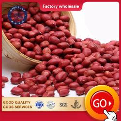 中国の販売のための工場によって乾燥されるカーネルピーナツピーナッツの未加工か新しく赤い皮Arachid