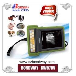 Ultrasuono veterinario portatile delle attrezzature mediche Bw570V