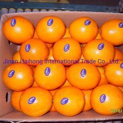 Nova cultura Sweet China Tangerine Orange