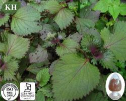 Extracto de hojas de perilla de alta calidad 10: 1 Perilla frutescens