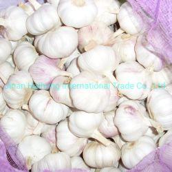 Nueva cosecha de ajo fresco de la fábrica China Wholesale