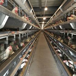 Schicht-Rahmen-Huhn-Rahmen-Ei-Huhn-Henne-Geflügel-Gerät