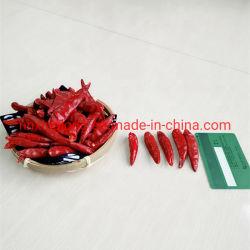 الفلفل الأحمر الصيني المجفف / تشوتيان تشيلي / تيانجين تشيلي