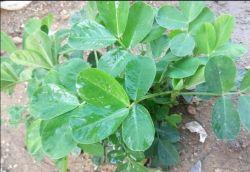 أدوات ضبط السليكون العضوي الزراعي من هانغتشو في سيلاوي بأفضل جودة وسعر البيع