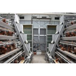 نوع جديد طبقة الدجاج Cage مع نظام الآلية الآلية