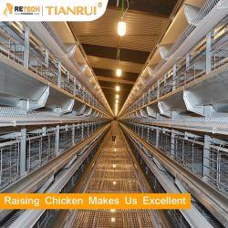 놓는 암탉을%s 자동적인 가금 농기구 건전지 계란 층 닭 감금소
