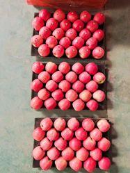 Красный вкусные FUJI Apple фрукты свежие