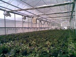 Pratique du système d'irrigation à effet de serre d'arrosage