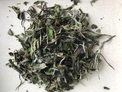 White Peony Tea Leaf 6900 avec le règlement UE et nous