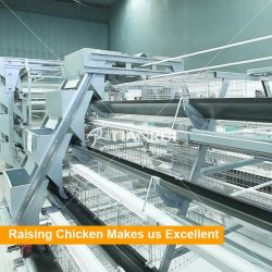 Gabbia di batteria d'agricoltura automatica piena del pollo di strato dell'uovo del sistema della Camera da vendere con il trasporto delle uova