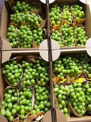 標準をエクスポートするための新しい穀物の高品質の新しい緑のブドウ