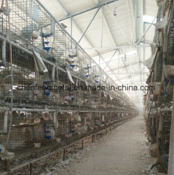 Moins cher le transport en plastique pliable Pigeon Dove Cage 60/80cm Taille