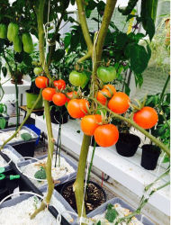 실내 PP 플라워 팟 플래터 토마토 오이 네덜란드 버킷