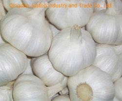 Frisches neues Getreide-reiner/normaler weißer Knoblauch