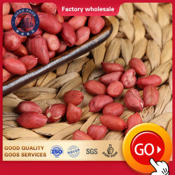 Noyau séchés personnalisé arachides Arachides Raw/Arachid rouge fraîche de la peau pour la vente