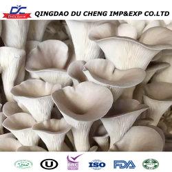 Fazenda congelados Fruitwood Orgânicos Gray Oyster micélios de sementes de Logs de cogumelo ostra