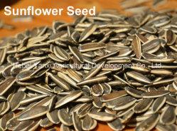 Asado de alta calidad china especiados Semillas de girasol