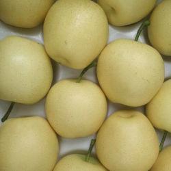 Новую Культуру свежим Золотой Pear фрукты