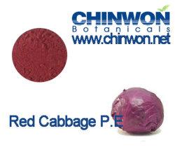 Colorantes naturales Repollo repollo Extracto de polvo rojo