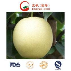 Il nuovo raccolto che esporta pera dorata standard