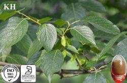 自然なEucommiaの葉のエキスのChlorogenic酸5% ~98%の高性能液体クロマトグラフィー